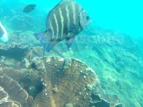 scuba diving in tarkarli season