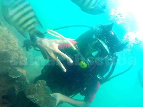 scuba diving in tarkarli price