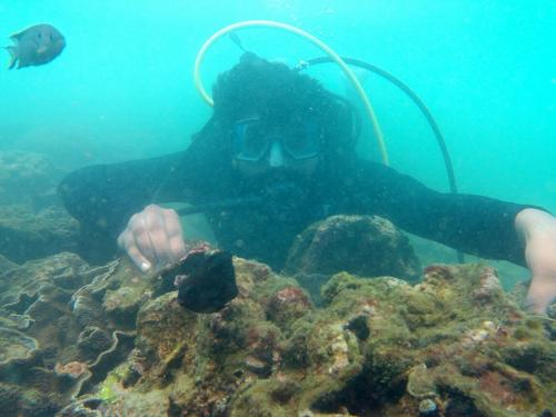 scuba diving in tarkarli booking