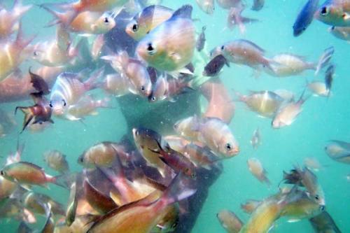 tarkarli-scuba-diving-